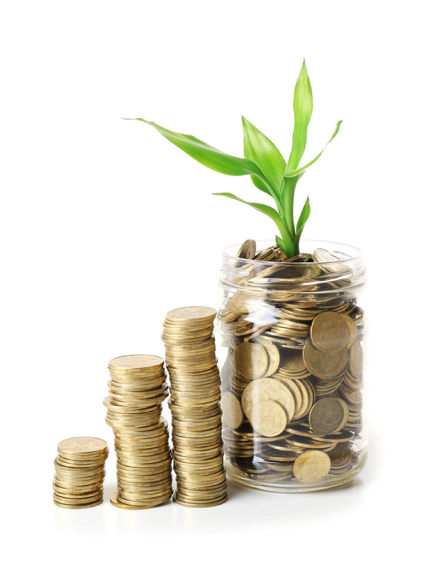 Plant growing in coins in jar-01